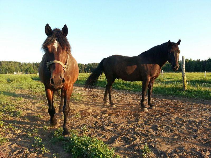 horse-214807960720